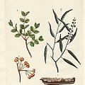 Medicinal Plants by Splendid Art Prints