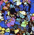 Meteorite Nwa 6435, Light Micrograph by Science Photo Library