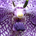 Micro Orchid by Yenni Harrison