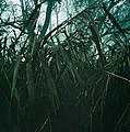Misty Trees by Shawn Hempel