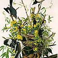Mocking Birds And Rattlesnake by John James Audubon