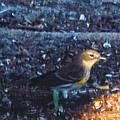 Mockingbird by Robert Floyd