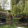 Monets Garden by Mac Kenney