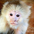 Monkey by Trina  Ansel
