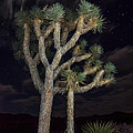Moon Over Joshua - Joshua Tree National Park In California by Jamie Pham