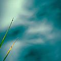 Morning Dew  by Bob Orsillo