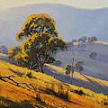 Morning Sunlight  by Graham Gercken
