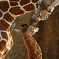 Mother's Love by Traci Law