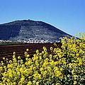 Mount Of Transfiguration by Thomas R Fletcher