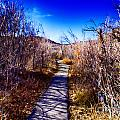 Mountain Creek Path-sundance Utah by Douglas Barnard
