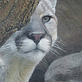 Mountain Lion Painterly by Ernie Echols
