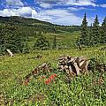 Mountain Meadow  by Sally Weigand