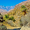 Mountain Peaks From Lower Palm Canyon Trail In Indian Canyons Near Palm Springs-california by Ruth Hager