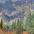 Mountains And Trees by Kathleen Struckle