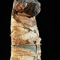 Mummified Dog From Ancient Egypt by Thierry Berrod, Mona Lisa Production/ Science Photo Library