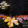 Mushrooms In Autumn