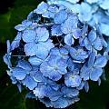 My Blue Heaven by Shannon Louder