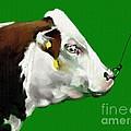 My Favorite Bull by Adele Pfenninger