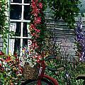 My Old Bike by Steven Schultz