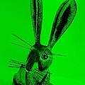 New Mexico Rabbit Green by Rob Hans