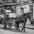 New Orleans - Carriage Ride Bw by Steve Harrington
