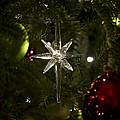 Night View Christmas Tree   1 Of 4 by Terri Winkler