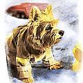 Norwich Terrier Fire Dog by Susan Stone