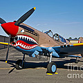 Nose Art On A Curtiss P-40e Warhawk by Scott Germain