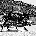 Not A Cowboy by Giuseppe Ridino