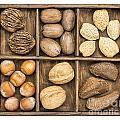 Nuts In Rustic Wooden Box by Marek Uliasz
