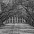 Oak Alley Bw by Steve Harrington