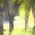 Oaks 25 by Pamela Cooper