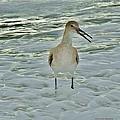 Ocean Bird by Holly Dwyer