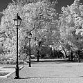October Infrared by Jennifer Ann Henry
