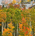 Ohio Pass Fall Colors by Ray Mathis