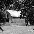 Old Barn 4 by Dwight Cook