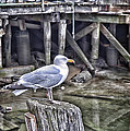 On The Waterfront by Richard Bean