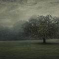 One Tree by Svetlana Sewell
