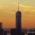 One Wtc From Top Of The Rock by Steven Spak