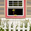 Open Window With Yellow Flower In Vase by Jim Corwin