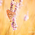 Orange Butterfly by Matteo Colombo