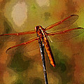 Orange Dragonfly by Tom Janca