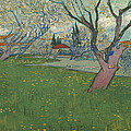Orchards In Blossom by Vincent Van Gogh