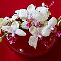 Orchid Center Piece by Paul Indigo