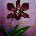 Orchid by Zina Stromberg