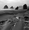 Oregon Coast 2 In Bw by Mike Nellums