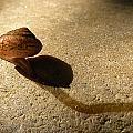 Oregon Snail by Lindy Pollard