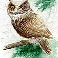 Owl Study by Steven Schultz