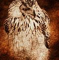 Owl by Svetlana Sewell