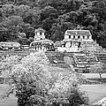 Palenque City by Roy Pedersen